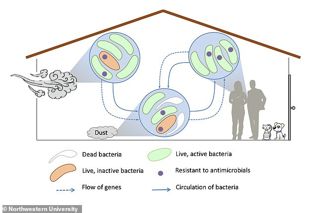Dust in your home may be spreading superbugs by carrying genes which make pathogens resistant to antibiotics, researchers have found