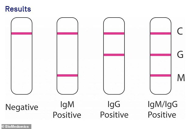 It can be read similarly to a pregnancy test, with one line for a negative test, two signifying it's positive for either early or late antibodies, and three when the sample is positive for both